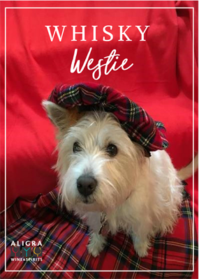 Introducing Georgie Girl, our Whisky Westie!